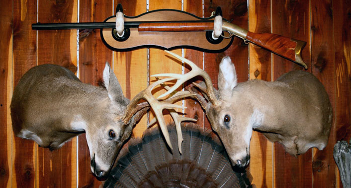 Mule deer buck with snow accents bear skull with claws mounted on a